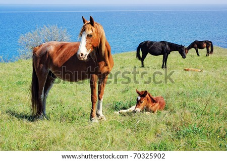 A herd of horses with foals pasturing on the meadow near the water reservoir - stock photo