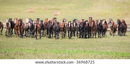 A herd of young horses on green pasture - stock photo