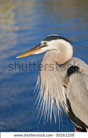A heron by the water on the Alabama gulf coast. - stock photo