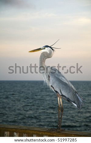 A heron resting on a pier in Gulf Shores Alabama. - stock photo
