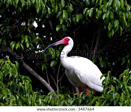 A heron sitting on the top of a tree in a tropical island - stock photo