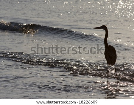 A herons silhouette against the water on the Alabama gulf coast. - stock photo