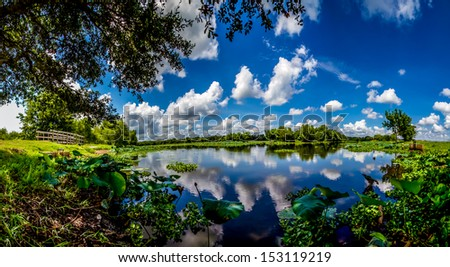 A High Resolution, Colorful, Panoramic Shot of Beautiful 40-Acre Lake with Summer Yellow Lotus Lilies, Blue Skies, White Clouds, and Green Foliage at Brazos Bend State Park, Texas. - stock photo