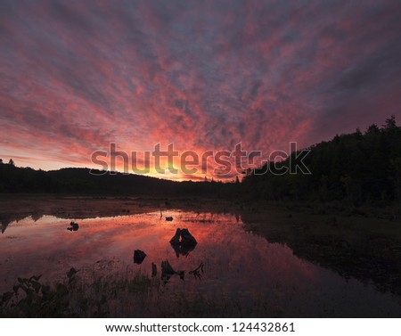 A highly saturated image of a sunset over a flooded swamp.