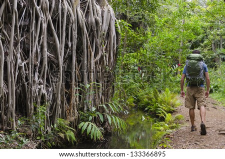 A hiker walking through a jungle path in Hawaii. - stock photo