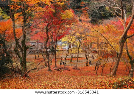 A hiking footpath going up a hill of fiery maple trees in deep autumn ~ Scenery of beautiful fall foliage in Kyoto, Japan ~ View of tourists on a pathway into a fascinating forest of red maple trees - stock photo