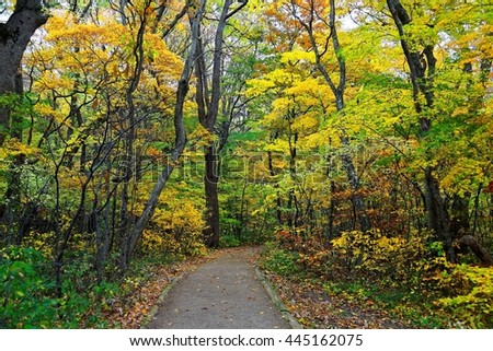 A hiking trail in the forest of colorful maple foliage by Lake Towada in romantic autumn season, in Towada Hachimantai National Park, Aomori, Japan ~ Fall scenery of Japanese countryside - stock photo