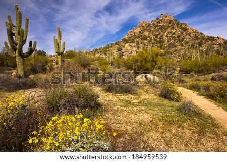 A hiking trail leads the hiker past giant saguaros and flowering bushes toward the boulder strewn mountain - stock photo
