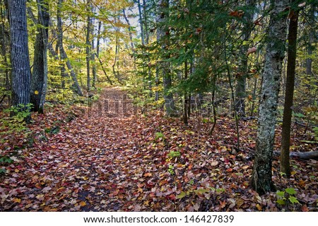 A hiking trail through the autumn woods at Newport State Park in Door County, Wisconsin. - stock photo
