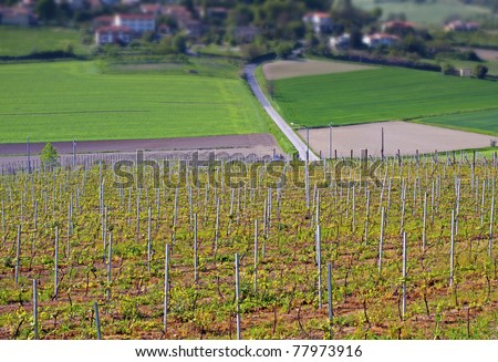 A hill with vineyard with another hill on the background - stock photo