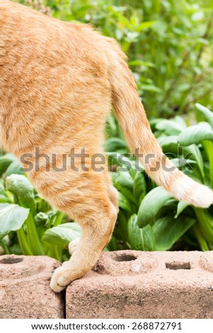 A hind part of an orange tabby cat - stock photo