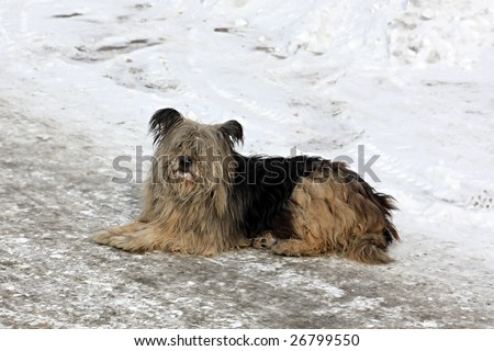 A homeless dog lies on to snow.