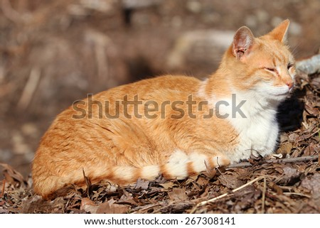 A Homeless Feral Cat Enjoying the Sun on a Cold Spring Day.