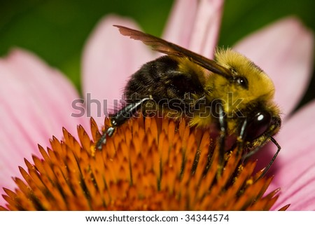 A Honey Bee on a flower bed