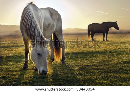 A horse and a foggy morning - stock photo