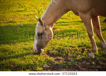 A horse backlit with natural sunlight grazing on a farm. - stock photo