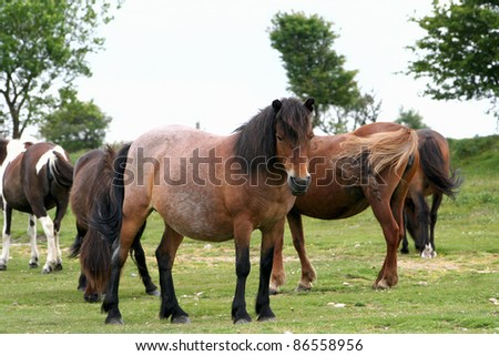 A horse farm encountered in Dartmoor National Park of Devon, UK