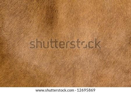 a horse fur close up - stock photo