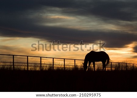 A horse grazes as the sunset fades over a Colorado ranch. - stock photo
