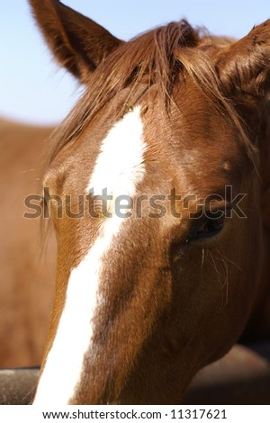 A horse in a farm - a sad sight