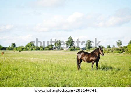 a horse in a field - stock photo