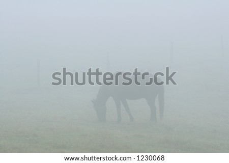 A horse in a field, covered by a thick fog. - stock photo