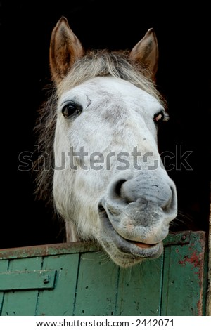 A horse in its paddock - stock photo