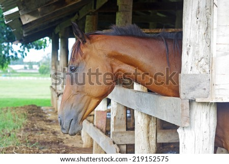 a horse in stable with green field background - stock photo