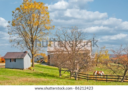 A horse is grazing inside the fence at a horse farm in Kentucky, USA. - stock photo