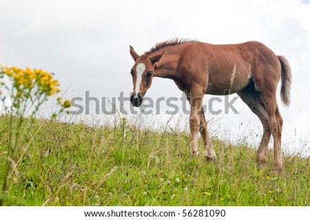 A horse on a hill side. - stock photo