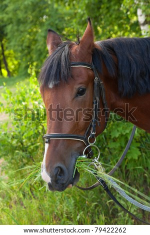 A horse on a walk in the woods eats grass