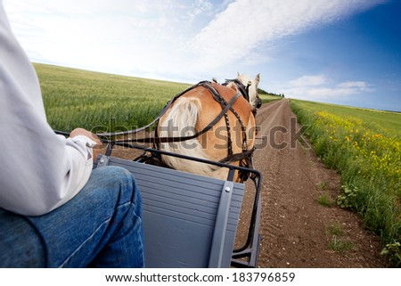 A horse pulling a cart accross a beautiful Saskatchewan landscape - stock photo
