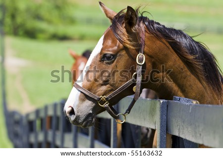 A horse ranch in Kentucky, USA with horses standing along a fence. - stock photo