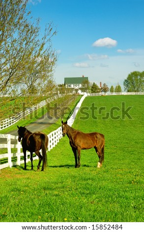 A horse ranch in Kentucky, USA with horses standing along the white fence and the house in the background. - stock photo
