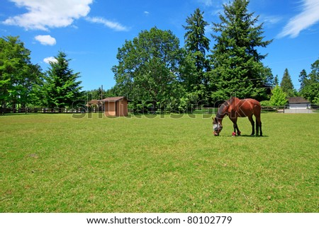 A horse ranch in Washington State, USA with horse eating at the pasture and the house in the background. - stock photo