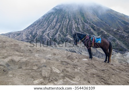 A horse resting at Bromo Mountain - stock photo