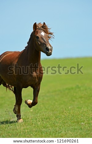 A horse running gallop on the field