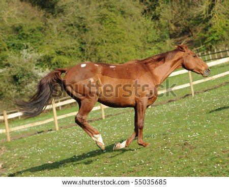A horse running in field