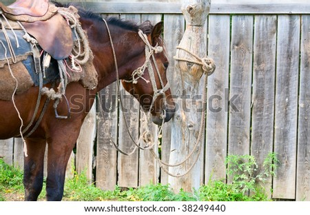 A horse tied to a pole in the village - stock photo