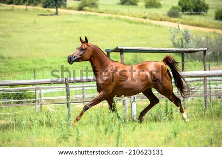 a horse trotting in a green grassy field - stock photo