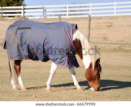 A horse wearing a rug for warmth during the winter season.