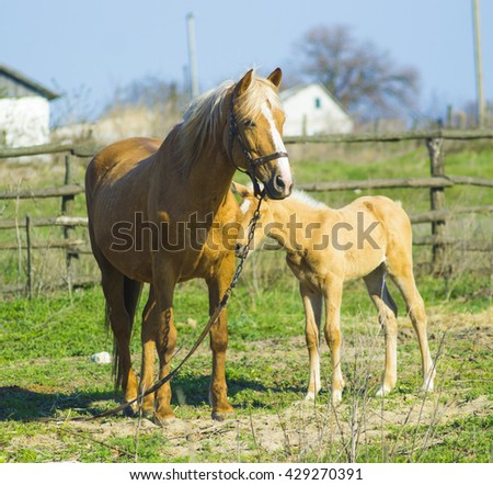 A horse with a foal. Animals horse with a foal. A pet mammal farm horse and foal - stock photo