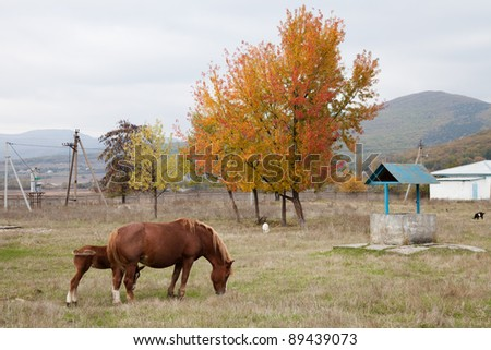 A horse with a foal grazing on field - stock photo