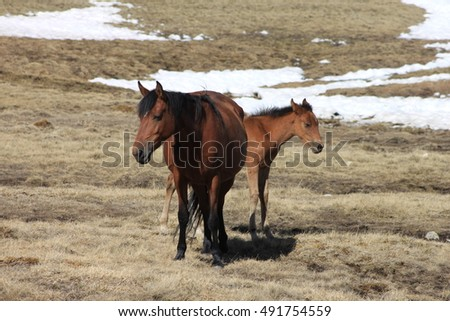 a horse with a foal on the hillside