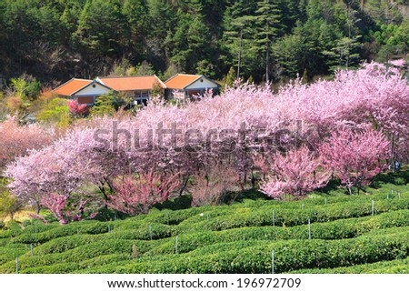 A house with green trees behind it and lilac colored trees in front of it. - stock photo