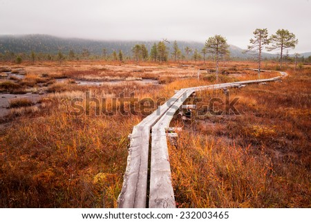 a huge bog in finland - stock photo