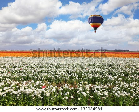 A huge bright balloon flies above a picturesque field of colorful blooming buttercups