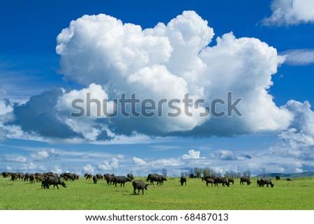 a huge cloud above an african savannah - stock photo