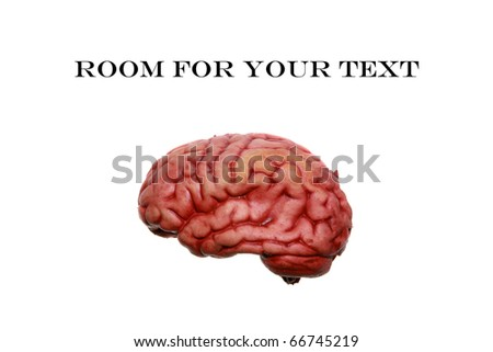 A Human brain isolated on white, with room for your text or thoughts - stock photo