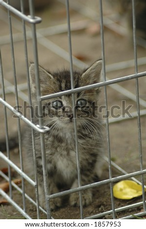A humane society kitten peering out of a kennel. - stock photo